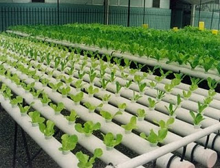 proyectos ingenieria agricola