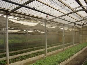 desarrollo proyectos agro industria